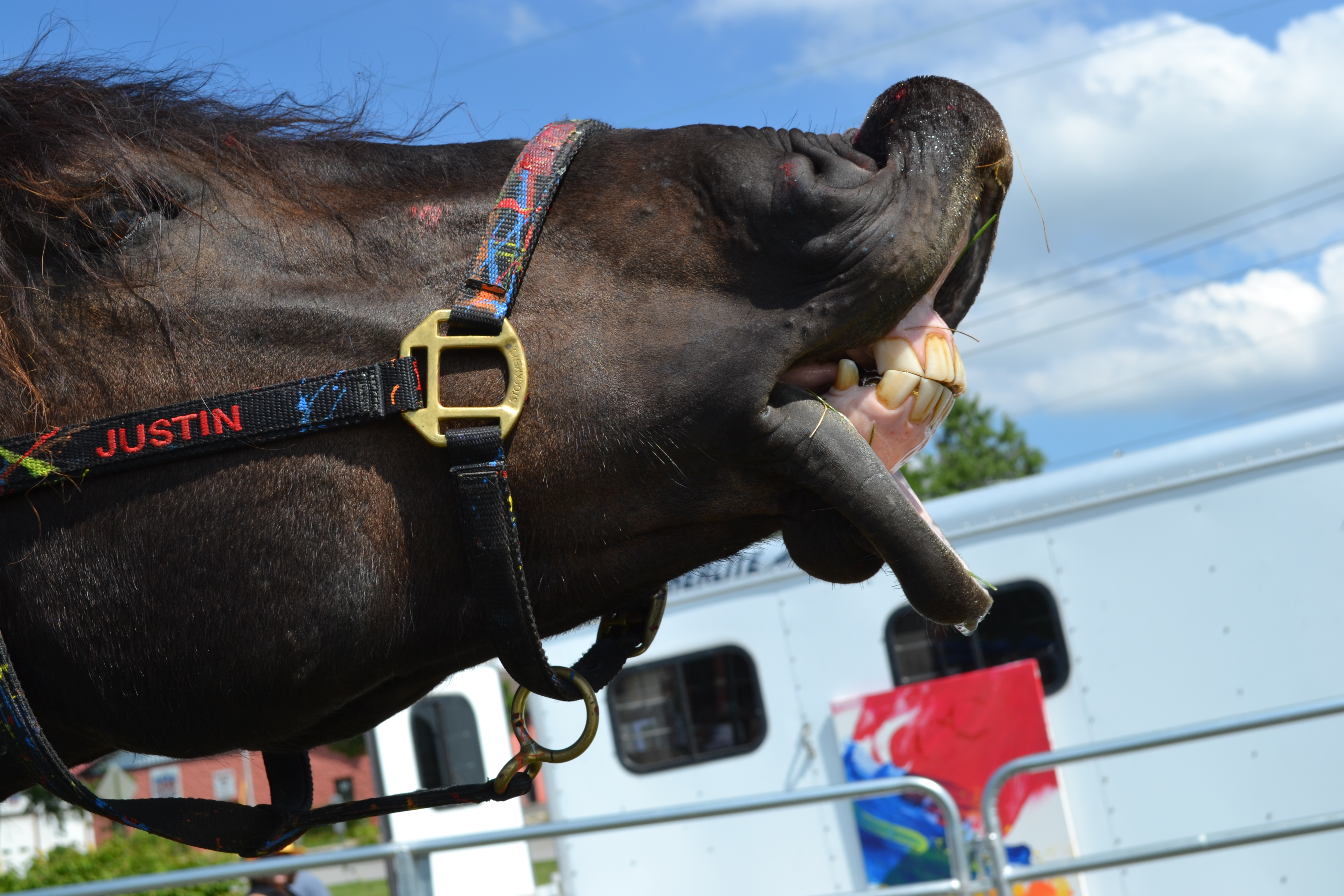Don't Look a Gift Horse in the Mouth – Artistic Horses